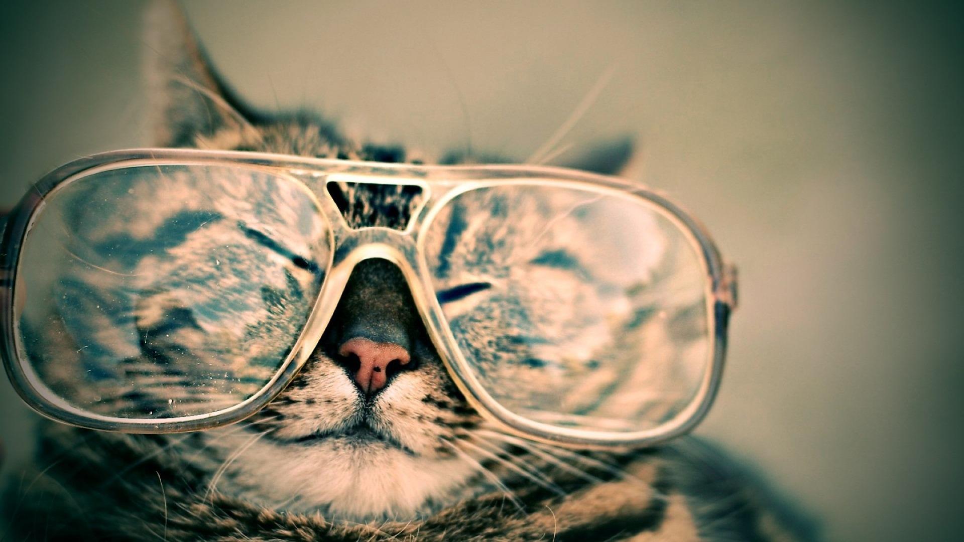 mačke, siros, job, dream job
